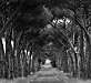 The road to Alberese, Maremma, Tuscany